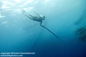 Fisherman-going-deep-to-catch-fish